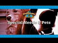 Special Needs and Pets
