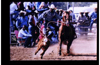 Rodeo (009-005-472-0032)