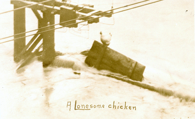 A Lonesome Chicken