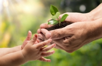 An adult hands passing a plant to a child