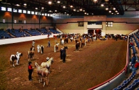 Horse O' Rama event in Fort Worth
