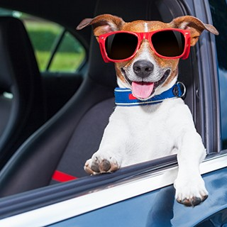 dog wearing shades in driver's seat of car